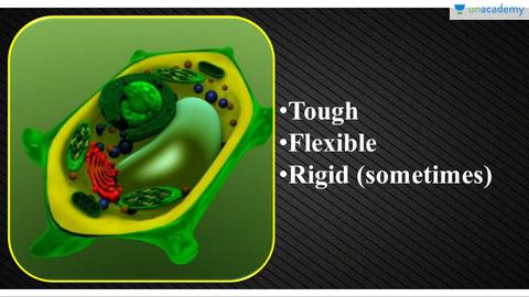 (Hindi) Organelles of Eukaryotic Cells - Molecular Cell ...