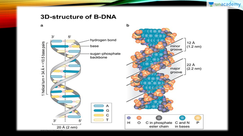 Structure of dna in hindi hindi biology class 12 molecular structure of dna in hindi hindi biology class 12 molecular basis of inheritance unacademy ccuart Image collections