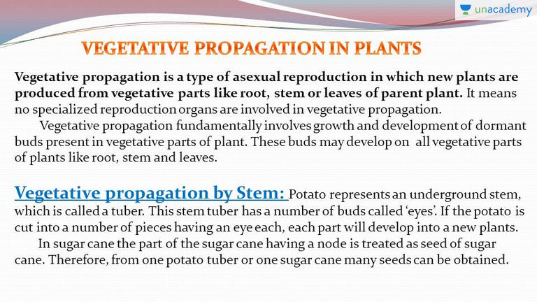 Vegetative propagation asexual reproduction definitions