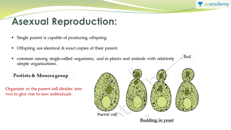 Methods of asexual reproduction in yeast