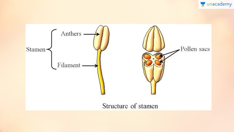 Sexual reproduction in flowering plants animation